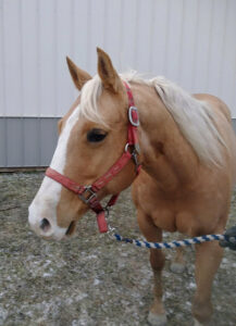 Image of Bella Rae the horse