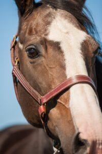 Image of Chance the horse