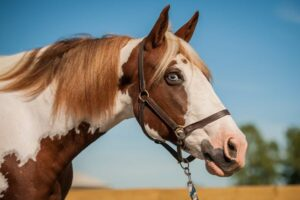 Image of Penny the horse